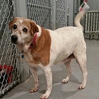 Adopt A Pet :: LuLu - Lexington, KY