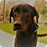 Adopt A Pet :: Humphrey - Austin, TX
