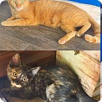Adopt A Pet :: Heidi - Orlando, FL