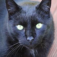 Adopt A Pet :: Elvis - Buchanan, TN