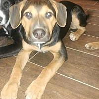 Adopt A Pet :: Nitro - Richmond, KY