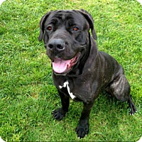 Adopt A Pet :: A037265 is at San Clemente - Beverly Hills, CA