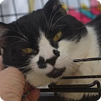 Adopt A Pet :: Snorlox - Brooklyn, NY