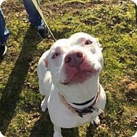 Adopt A Pet :: Buttercup - Mt. Pleasant, MI