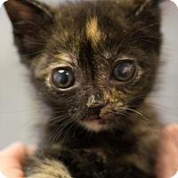 Adopt A Pet :: ELLIE MAE - Houston, TX