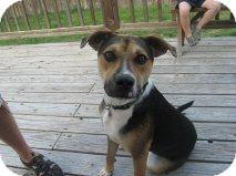 Redbone Coonhound/Greyhound Mix Puppy for adoption in Alliance, Nebraska - Robbie