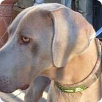 Adopt A Pet :: Skipper - Sun Valley, CA