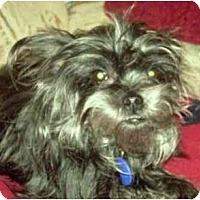 Adopt A Pet :: Mazee - Riverview, FL