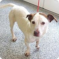 Adopt A Pet :: Lisa - Santa Monica, CA