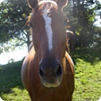 Adopt A Pet :: Hazlenut - Saugerties, NY