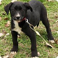 Adopt A Pet :: Kassidy - Staunton, VA