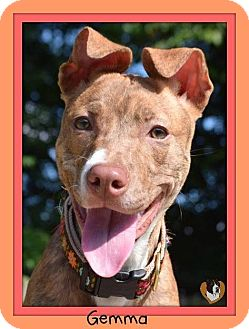 Pit Bull Terrier Mix Dog for adoption in Memphis, Tennessee - Gemma
