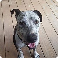 Adopt A Pet :: McCree - Millersville, MD