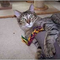 Adopt A Pet :: Larry - Sheboygan, WI