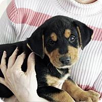 Adopt A Pet :: Simba - Oakhurst, NJ