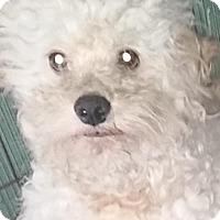 Adopt A Pet :: KODY - Longview, WA