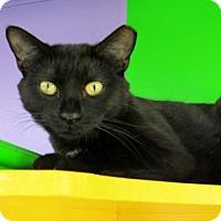 Adopt A Pet :: Maven - Northbrook, IL