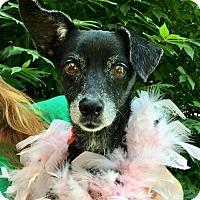 Adopt A Pet :: Heidi - Potomac, MD