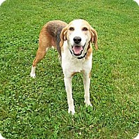 Adopt A Pet :: AnnaLee - Rustburg, VA