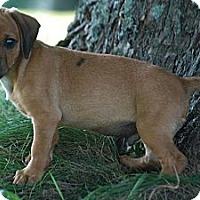 Adopt A Pet :: Rusty - Providence, RI