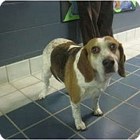Adopt A Pet :: Katie - Indianapolis, IN