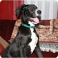 Adopt A Pet :: Rosie - Pearl River, NY