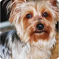 Adopt A Pet :: Hunter /READY!! - Commerce TWP, MI