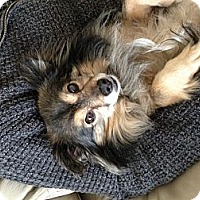 Adopt A Pet :: Sparkle - Sheridan, OR