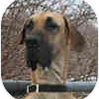 Adopt A Pet :: EASABELL - Pearl River, NY