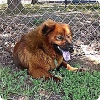 Adopt A Pet :: Bear - Somers, CT