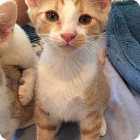 Adopt A Pet :: Scout - Irvine, CA