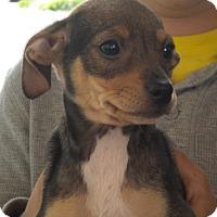 Adopt A Pet :: Tinker - Fresno, CA