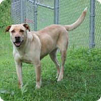 Adopt A Pet :: Jasper - Lufkin, TX