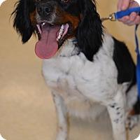 Adopt A Pet :: Bell - Ogden, UT