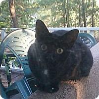 Adopt A Pet :: *Diablo - Winder, GA
