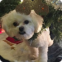 Adopt A Pet :: Duffy-Adoption pending - Bridgeton, MO