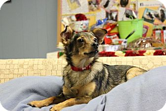 Terrier (Unknown Type, Small)/Chihuahua Mix Dog for adoption in New Richmond,, Wisconsin - Hailey