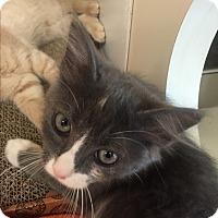 Adopt A Pet :: Penelope - Stafford, VA