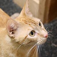 Adopt A Pet :: KJ - Roseville, CA