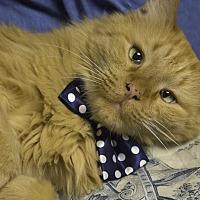 Adopt A Pet :: Tauntaun - St. Louis, MO