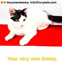 Adopt A Pet :: Emmy & Oscar - Studio City, CA