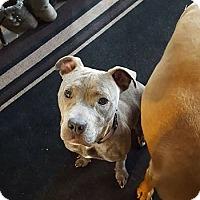 Adopt A Pet :: Mya - ROME, NY