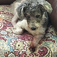 Adopt A Pet :: Patch - Lehigh, FL
