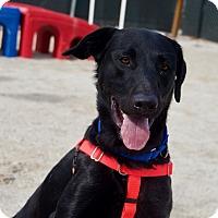 Adopt A Pet :: Waffles - Wheaton, IL