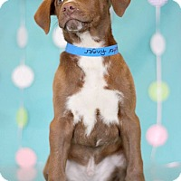 Adopt A Pet :: Butterfinger - Waldorf, MD