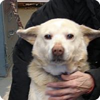Adopt A Pet :: Veronica - Aurora, IL