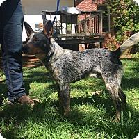 Adopt A Pet :: Johnnie - Jacksonville, TX