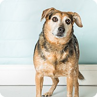 Adopt A Pet :: Bailey Faye - Hendersonville, NC