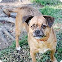 Adopt A Pet :: Joli - San Diego, CA