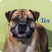 Adopt A Pet :: Tex - El Cajon, CA